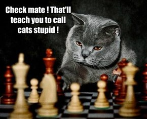 Check mate ! That'll teach you to call cats stupid !