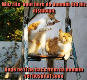 Wuz rite 'bout here da hoomin did hiz dismount  Hope he'll be back from da hoomin vet hospital soon