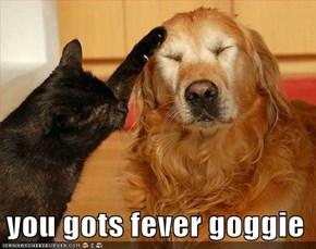 you gots fever goggie