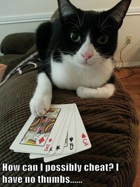 How can I possibly cheat? I have no thumbs......