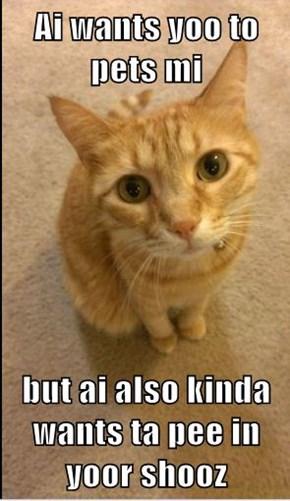 Ai wants yoo to pets mi  but ai also kinda wants ta pee in yoor shooz