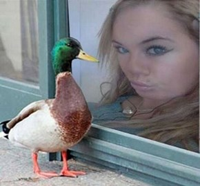 Duck Lips: Who Wore It Better?