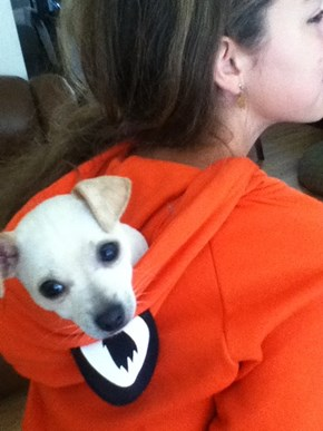 theres a puppy hiddin in my hoodie