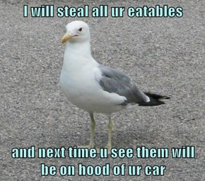 I will steal all ur eatables  and next time u see them will be on hood of ur car