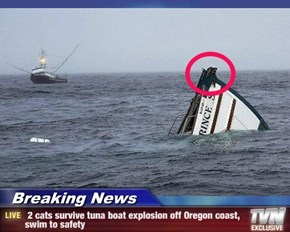Breaking News -  2 cats survive tuna boat explosion off Oregon coast, swim to safety