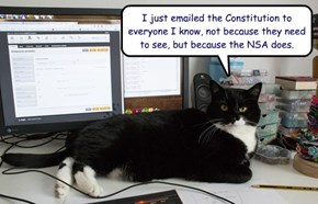 I just emailed the Constitution to everyone I know, not because they need to see, but because the NSA does.