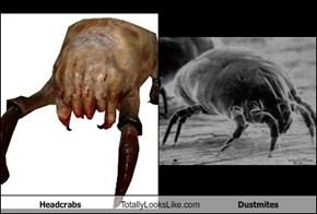Headcrabs Totally Looks Like Dustmites