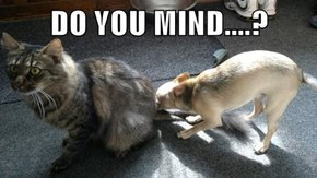 DO YOU MIND....?