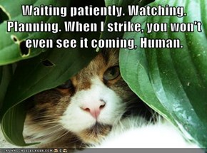 Waiting patiently. Watching. Planning. When I strike, you won't even see it coming, Human.