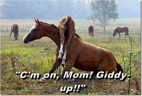 """C'm on, Mom! Giddy-up!!"""
