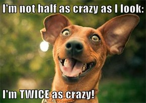 I'm not half as crazy as I look:  I'm TWICE as crazy!