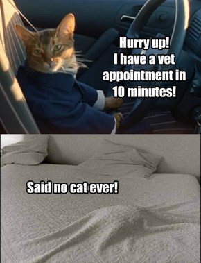 A cat's unmentionable!