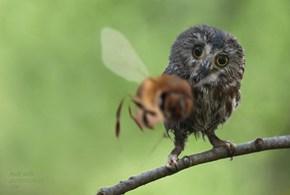 Well, Owl Bee!