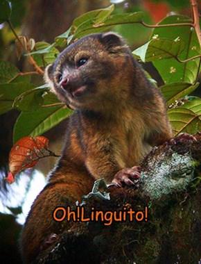 Oh!Linguito!