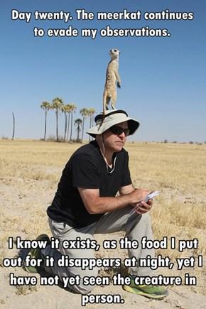 On the Look for the Elusive Meerkat
