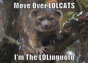 Move Over LOLCATS  I'm The LOLinguoto