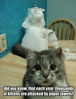 did you know, that each year, thousands of kittehs are attacked by paper towels?