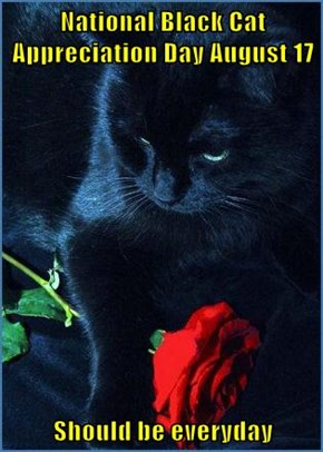 National Black Cat Appreciation Day August 17  Should be everyday