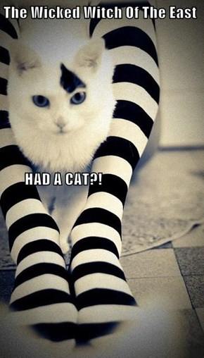 The Wicked Witch Of The East        HAD A CAT?!