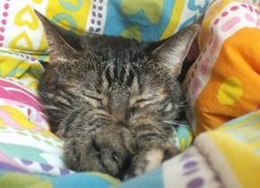 My Cat Annie Sleeping on my Bed