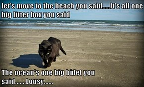 let's move to the beach you said.....It's all one big litter box you said   The ocean's one big bidet you said.......Lousy......