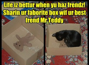 Life iz bettur when yu haz frendz! Sharin ur faborite box wif ur best frend Mr Teddy