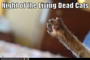 Night of the Living Dead Cats