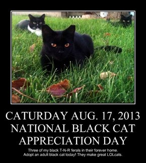 CATURDAY AUG. 17, 2013 NATIONAL BLACK CAT APPRECIATION DAY