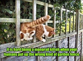 it is hard being a monorail kitteh when your humans put up the wrong kind of garden fence.