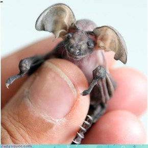 Creepicute Bat