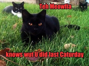 Teh Meowfia