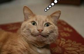 Door opens, Skillet falls, Cheezburger Mine!!!!!! Soon I be HAPPY CAT
