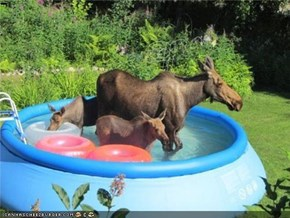 Canadian Pool Party