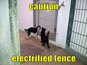 caution  electrified fence