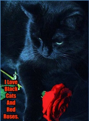 I Love Black Cats And Red Roses.