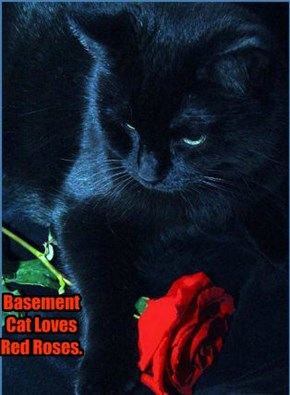 Basement Cat Loves Red Roses.