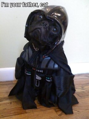 I'm your father, cat