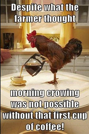 Despite what the farmer thought  morning crowing was not possible without that first cup of coffee!