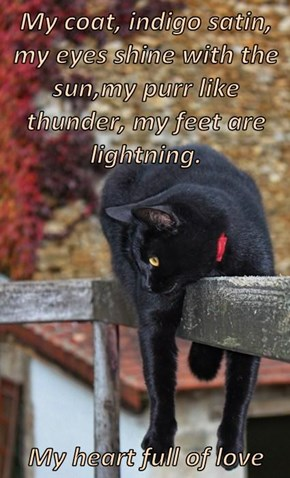 My coat, indigo satin, my eyes shine with the sun,my purr like thunder, my feet are lightning.   My heart full of love