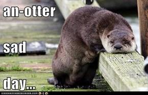 an-otter sad  day...