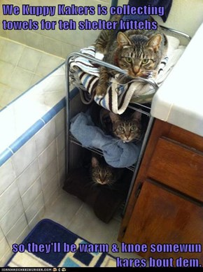 We Kuppy Kakers is collecting towels for teh shelter kittehs  so they'll be warm & knoe somewun kares bout dem.