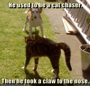 He used to be a cat chaser.  Then he took a claw to the nose.
