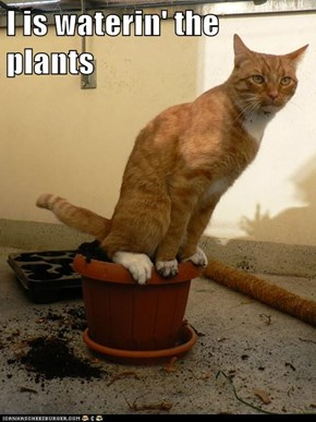 I is waterin' the plants