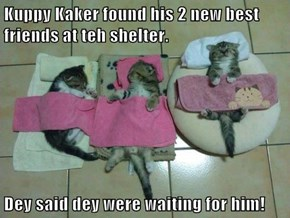 Kuppy Kaker found his 2 new best friends at teh shelter.  Dey said dey were waiting for him!