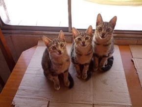 3 Little Cats