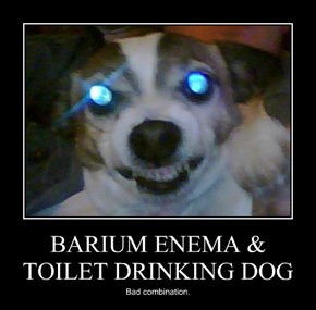 BARIUM ENEMA & TOILET DRINKING DOG