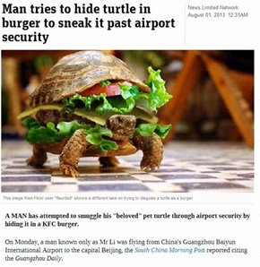 As it Turns Out, Turtles Are Difficult to Sneak by Security