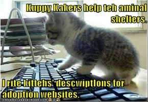 Kuppy Kakers help teh aminal shelters.  I rite kittehs' descwiptIons for adoption websites.