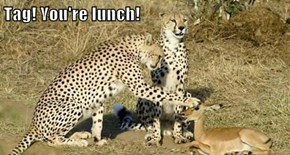 Tag! You're lunch!