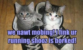 we nawt mobing! i fink ur running shooz is borked!